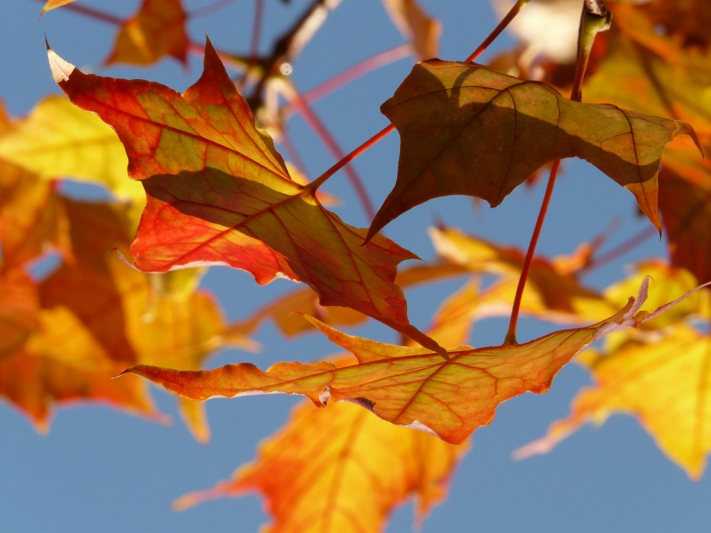 autumn-10484_1920